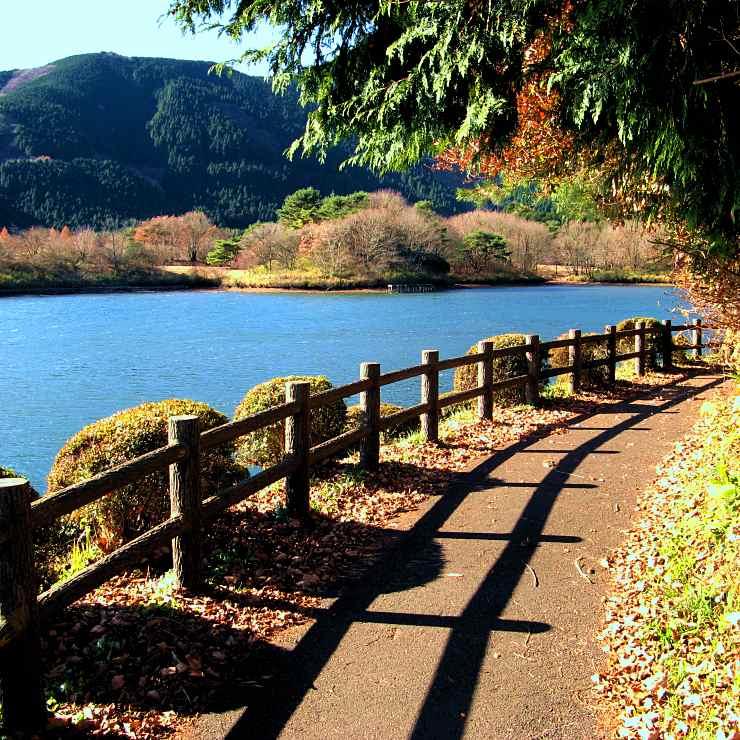 田貫湖「遊歩道」